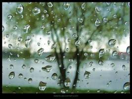 Raindrops... by kiebitz by Nature-Club