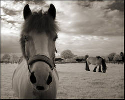 Two Horses by MichiLauke by Nature-Club