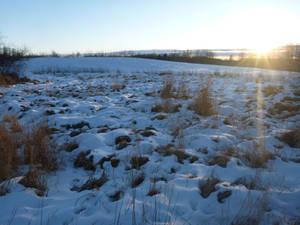 Snow at the Farm