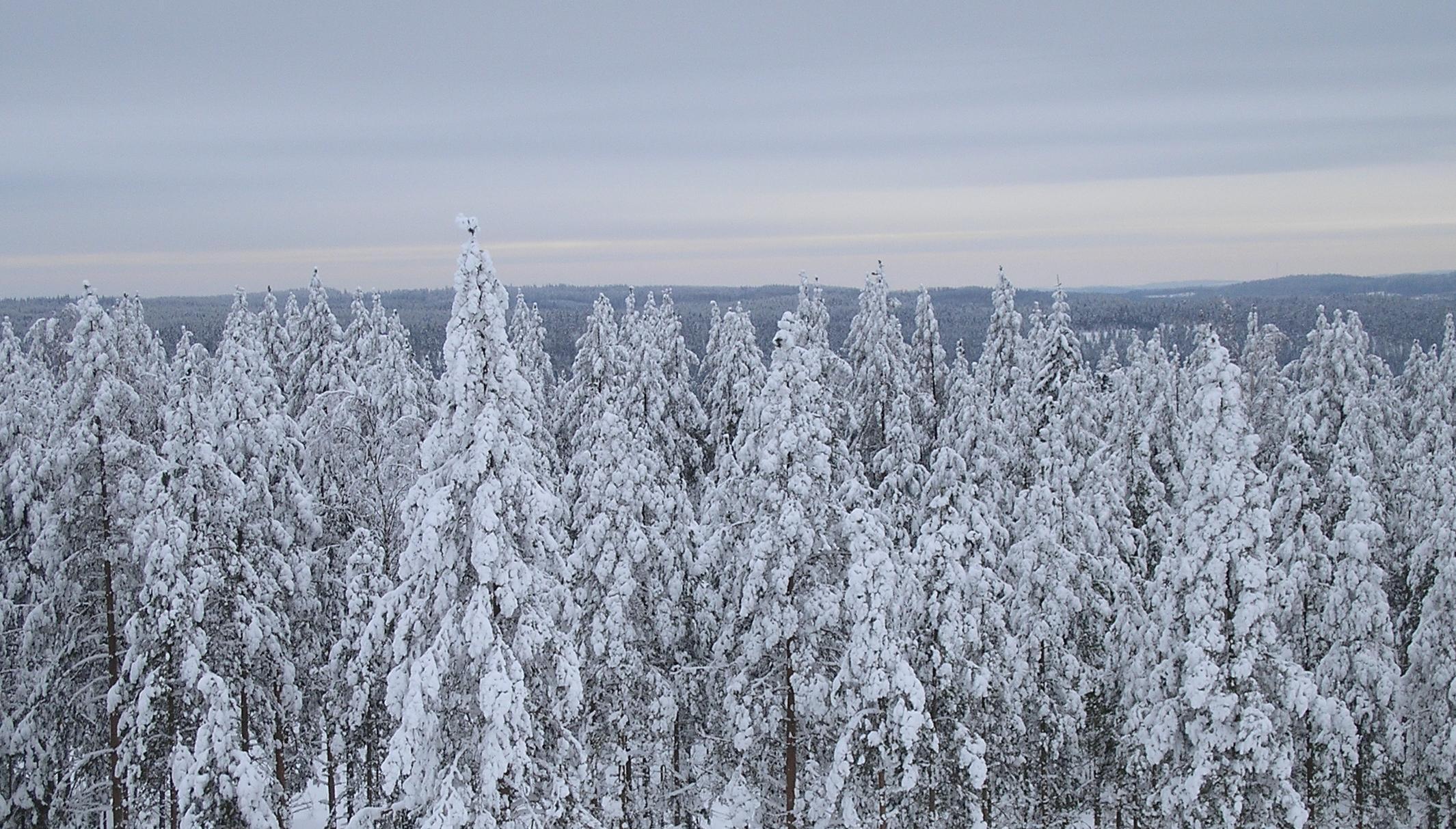 Winter Finland by Lumituisku