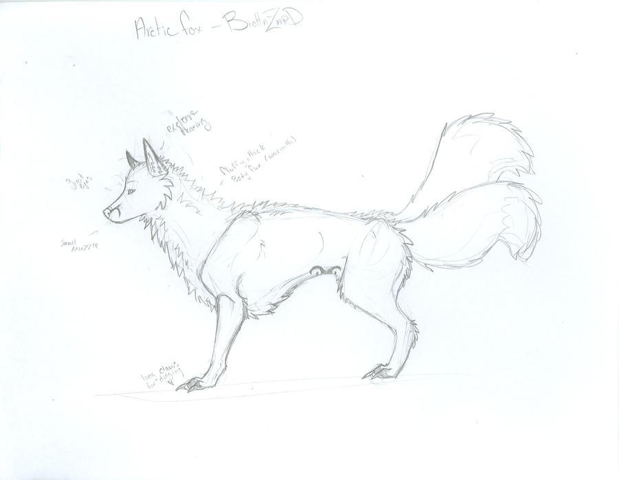 arctic fox anatomy by Green-gothfox on DeviantArt