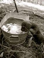 The water pup by samrockk