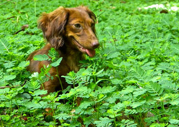 Lady's weeds. by samrockk