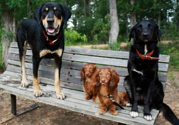 The gang. by samrockk