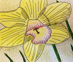Daffodil by Toadinthegarden