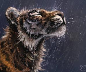 Wet tiger study by doosead