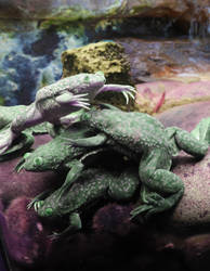 Pile o' Frogs by Stuckindoors