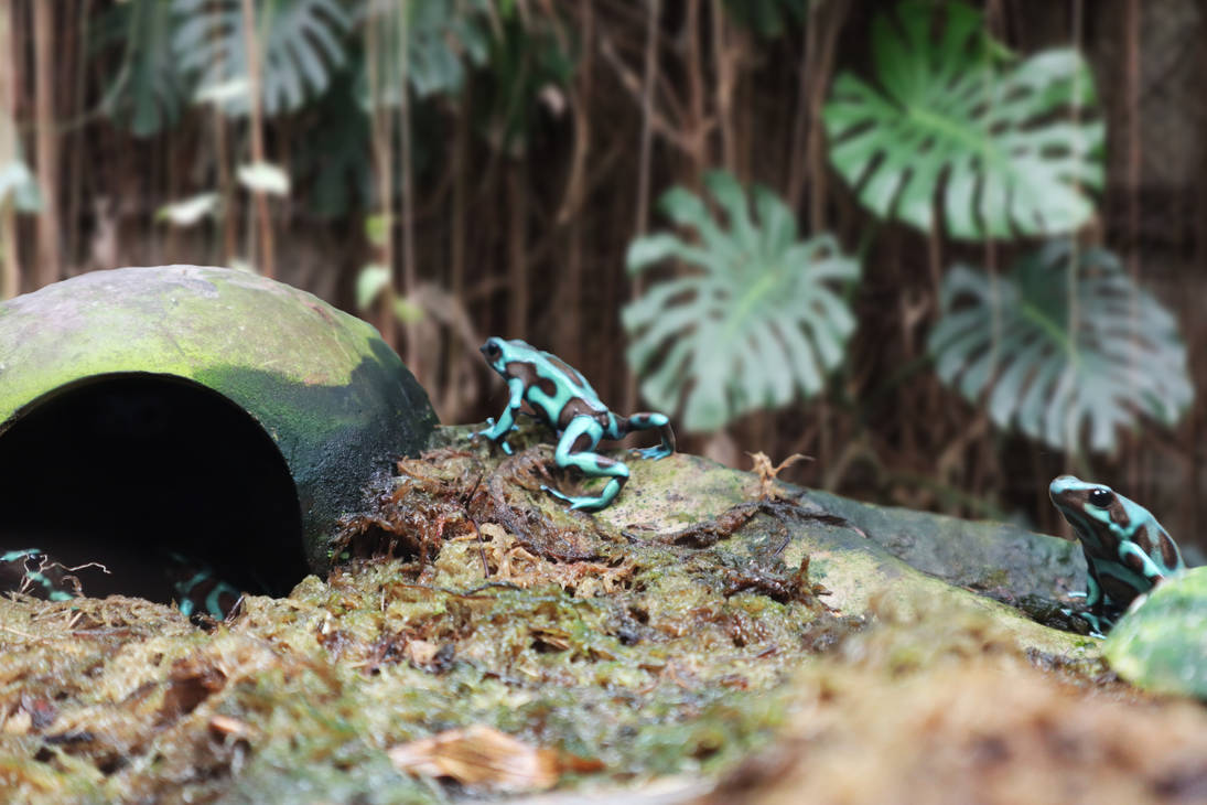 Blue Frogs-1 by Stuckindoors