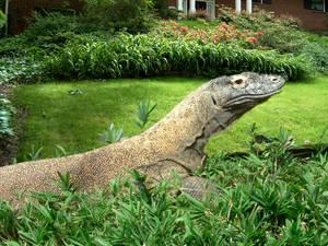 Urban Lizard
