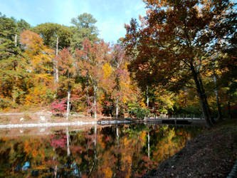 Pond in the fall
