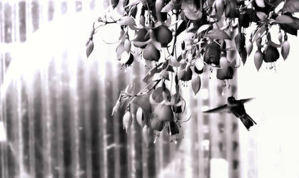 Black-n-White Dream_38 by caddman