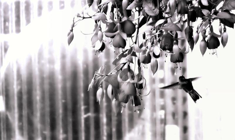 Black-n-White Dream_38
