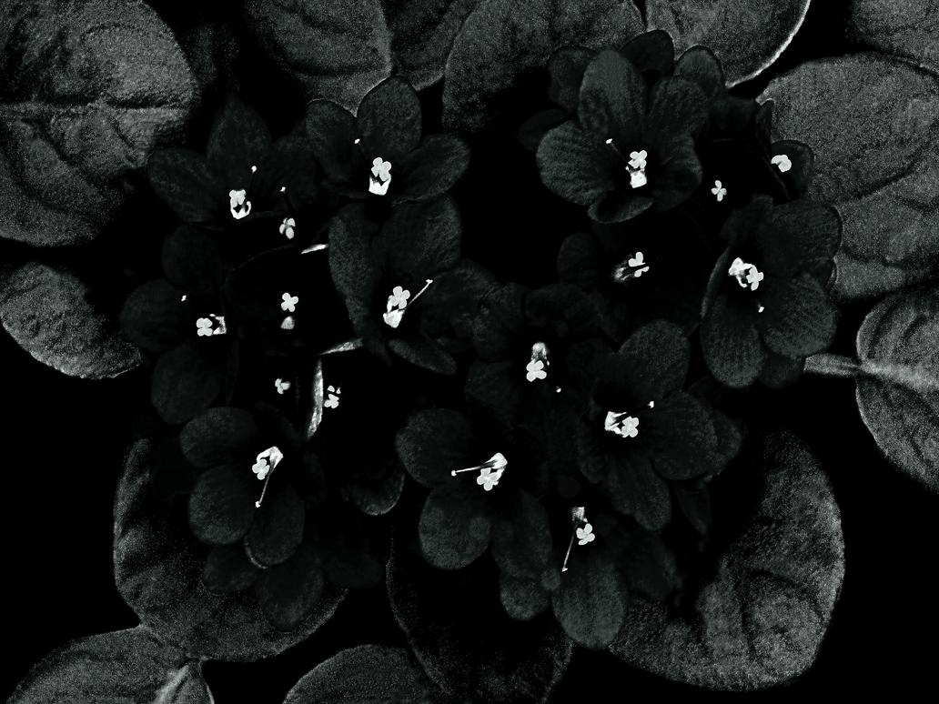 Black-n-White Dream_32 by caddman