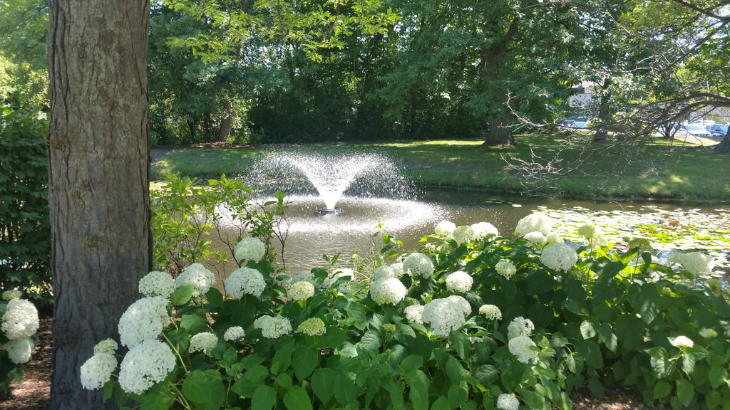 Flowered Fountain by No1much