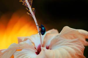 jewel bug II by Chacalxxx