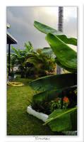 My garden by Chacalxxx