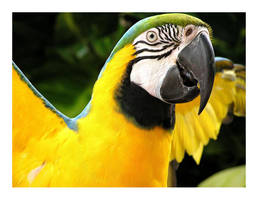 Parrot by Chacalxxx