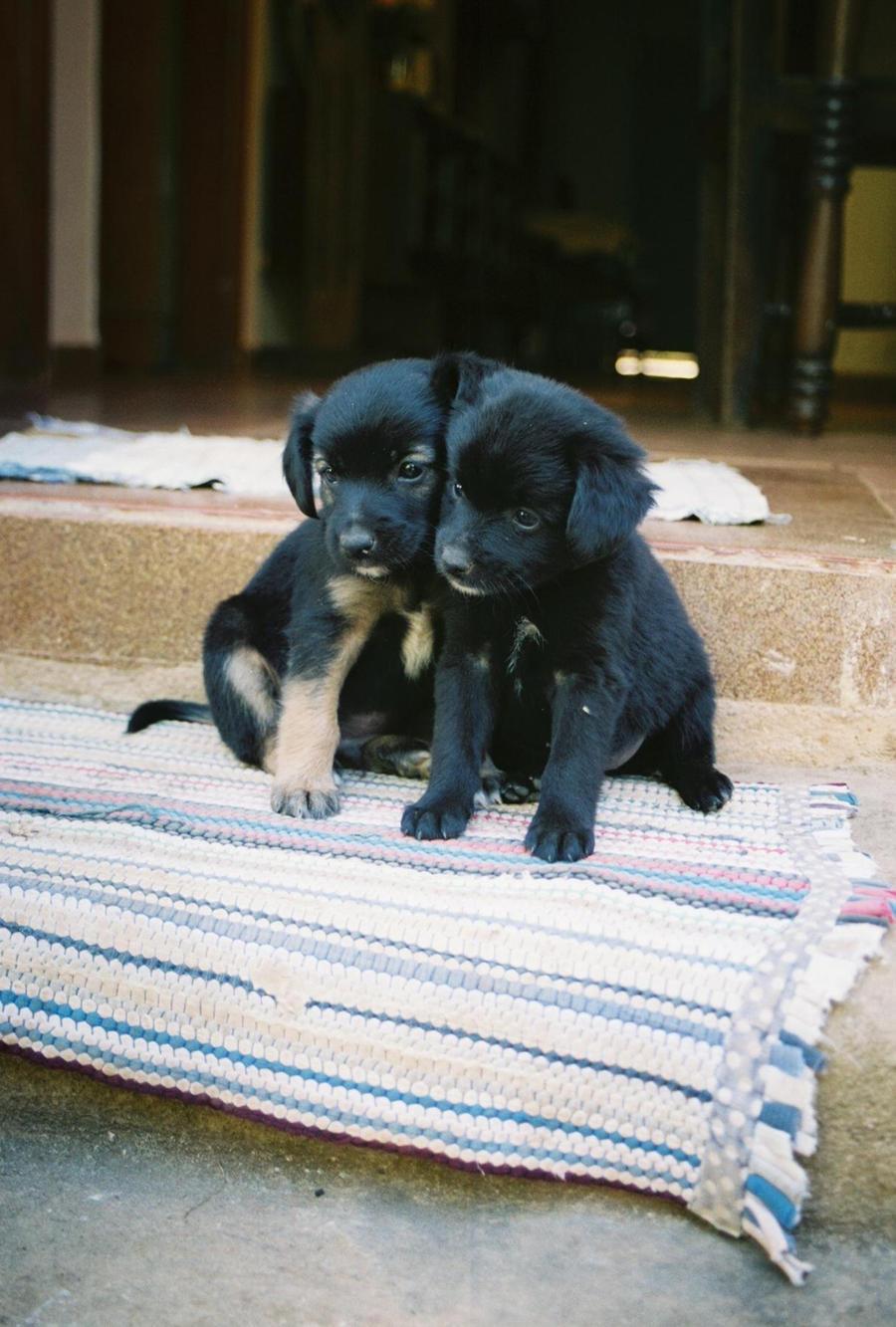 Brasil Puppies :3 by KouNaraishi
