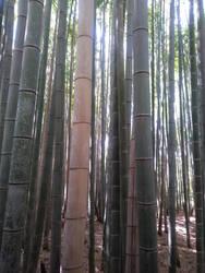 Arashiyama Bamboo by Amber2002161