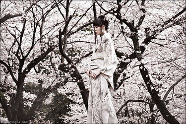 shirotsuki. ii by zemotion
