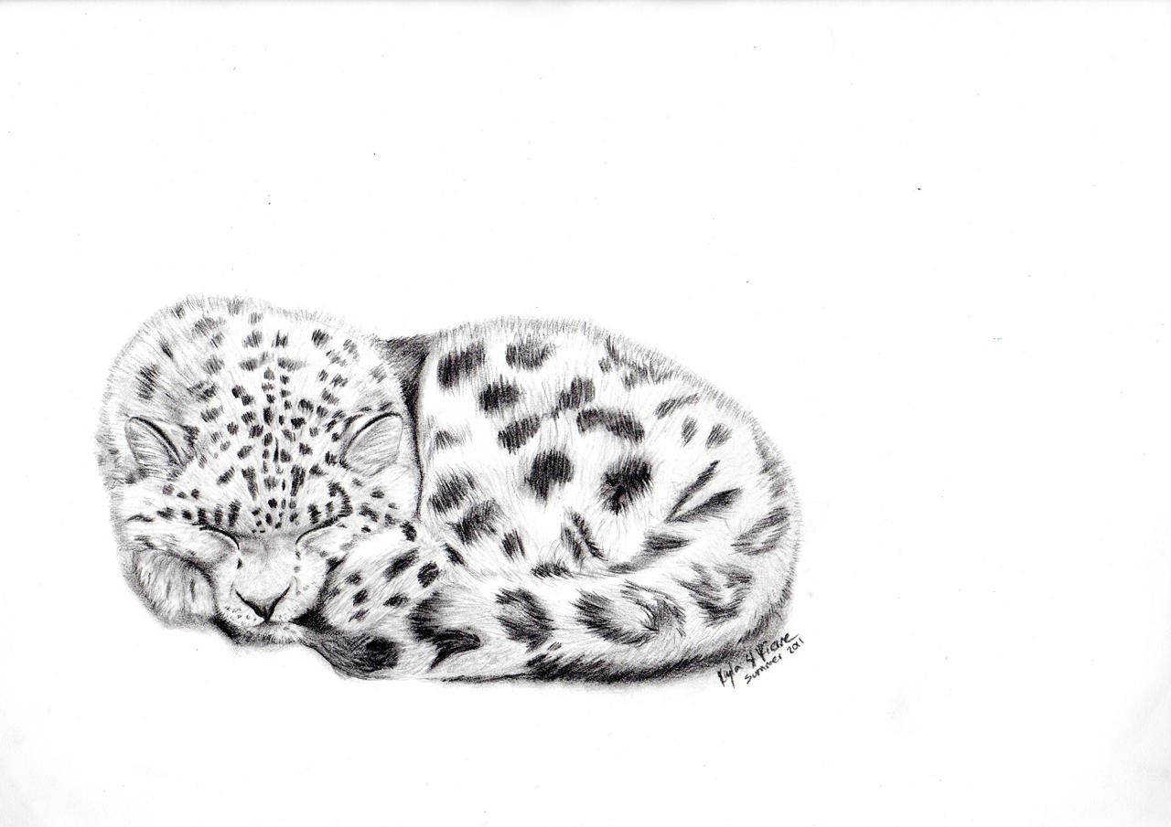 Baby Snow Leopard Drawing Easy Www Topsimages Com