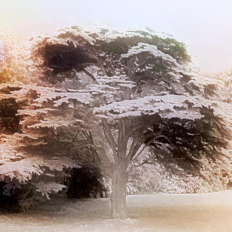Magic Cedar by MikeHenry