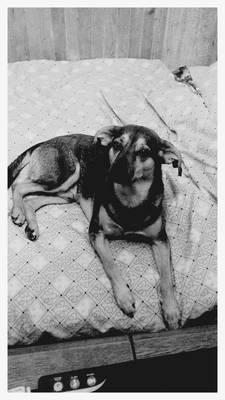 Barowel Doggo