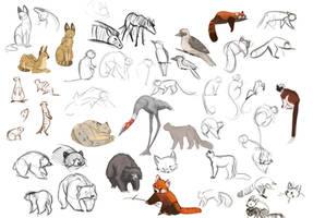 Zoo Life Studies by Zukitz