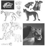 Lion Studies