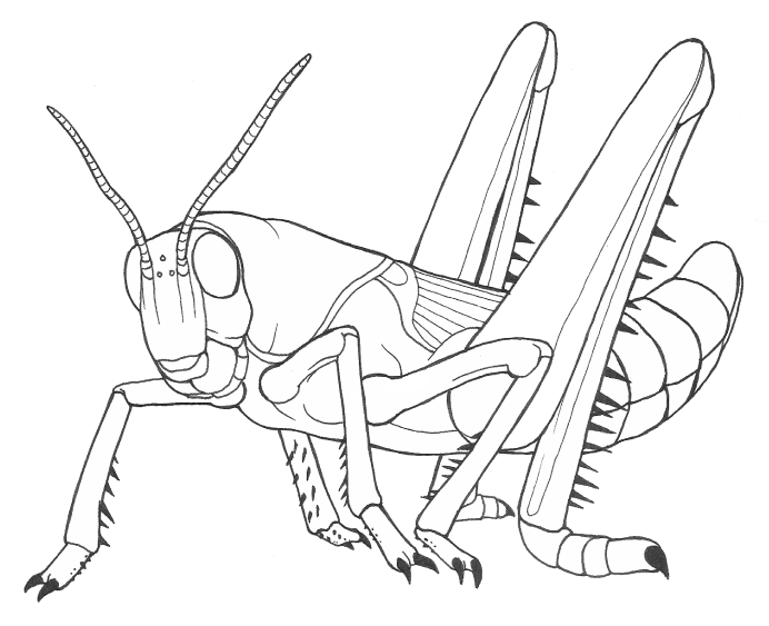 A Locust For Smiles By Nicthekitsune On Deviantart Locust Coloring Page