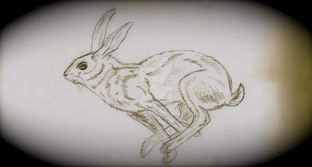 rabbit sketch by wolfwithapencil on deviantart