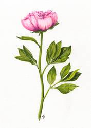 Gouache flower study no. 1 by ToftPilgaard