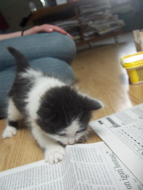 Little Kitten by misshappy007