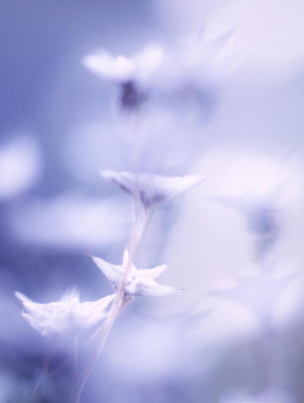 Frozen by Ann-MarieLoponen