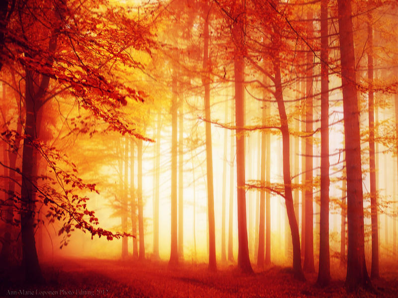 .: Autumn Sonata :. by Ann-MarieLoponen