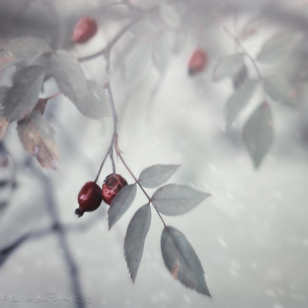 And Then The Winter Moved Into My Heart...