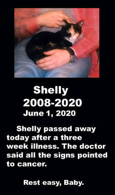 Shelly's final post