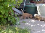 Kitties 10