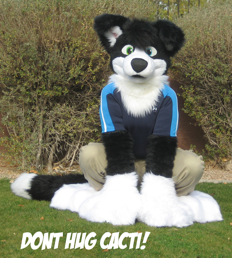 Go Back > Gallery For > Border Collie Fursuit
