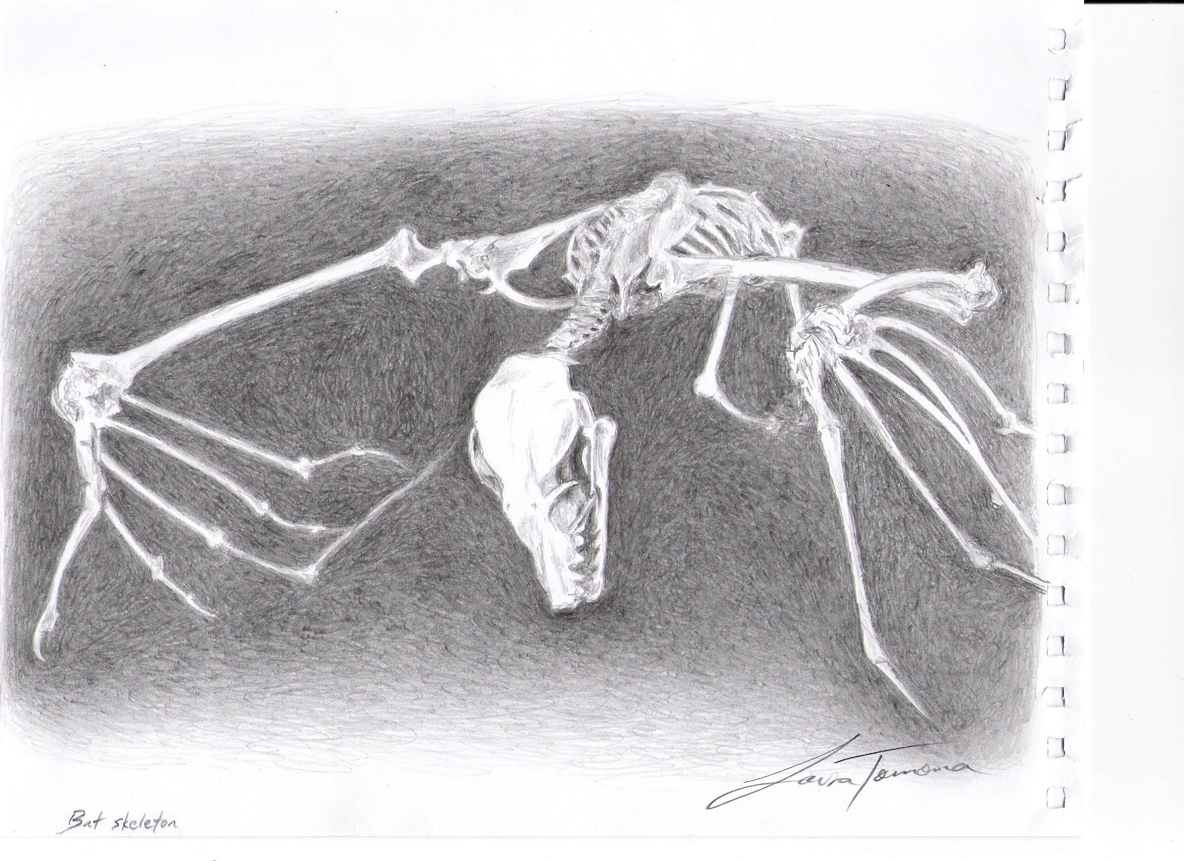 Bat skeleton by Artem-Anima