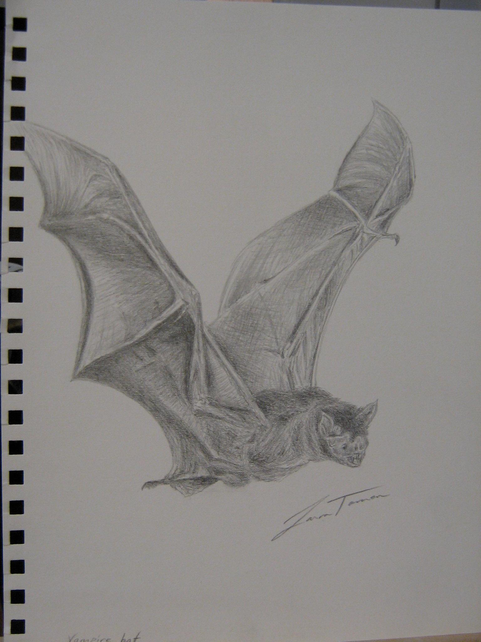 Vampire Bat by Artem-Anima