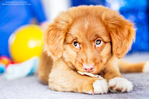 Puppy by Kaasik91