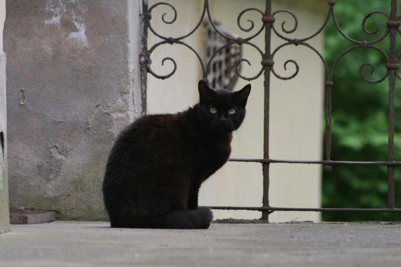 black cat by gabitur