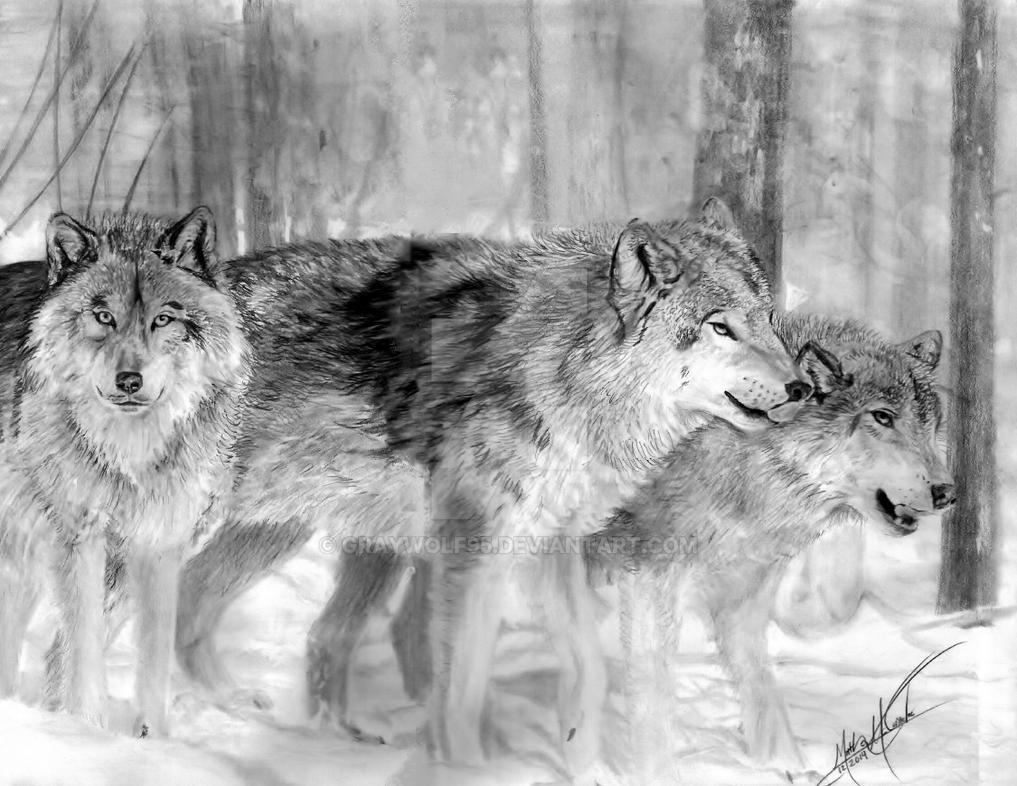 Wolf Trio by Graywolf95