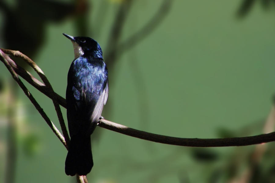 Western Australia 29 by Rastavari