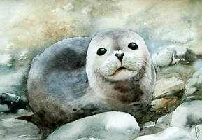 Curious seal on the pebbles