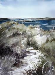 Cold seashore grass