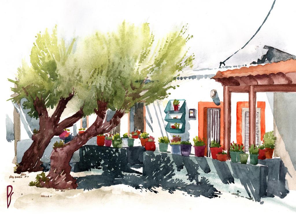 Front garden in Haraki by Zawij
