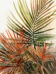 Arecaceae - household jungle #1 by Zawij