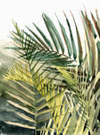 Arecaceae - household jungle in greens #2